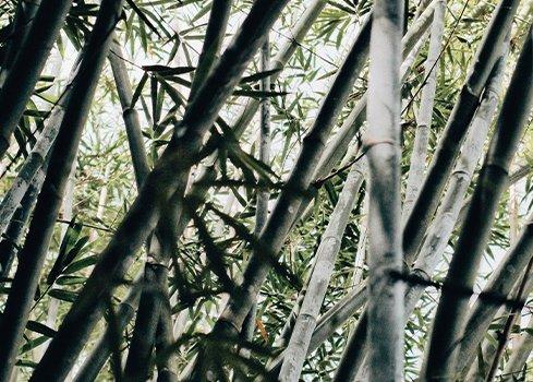Quelle(s) différence(s) entre stores vénitiens bois et bambou ?