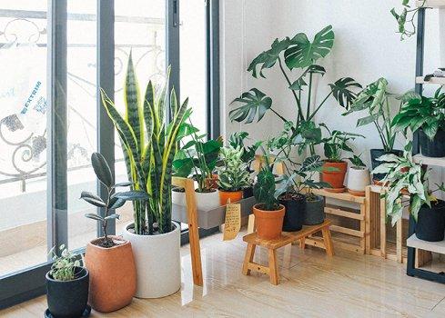 Qu'est-ce qu'un intérieur botanique ?