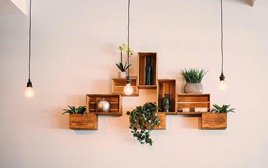 5. Achetez des plantes à longue vie