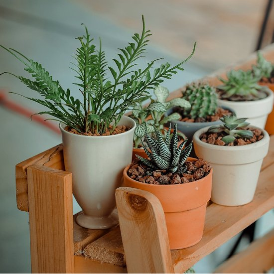 3. Illuminez votre maison avec des plantes et des fleurs
